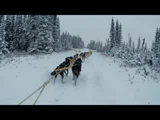 Anchorage, AK: Slow Motion Dogsledding Ride