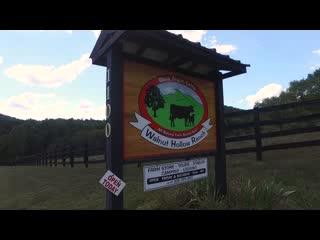 Hayesville, Carolina del Norte: Premium Black Angus Beef