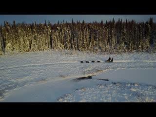 Anchorage, AK: Drone video - Alaska Dogsled Ride