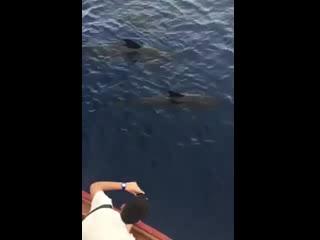 Arona, Ισπανία: Bahriyeli Pilot Whales