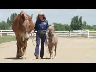 Loveland, CO: Lucky Three Ranch Tours