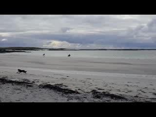 Ballyconneely, Irlandia: Beach Gallop
