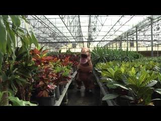Provo, UT: UV Rex Exploring McCoard's Corn Maze