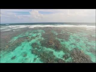 The Phoenix Resort in Belize - Overview