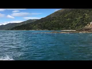 Marlborough Region, Νέα Ζηλανδία: Dolphins swimming their way to Raetihi Lodge