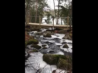 ‪‪Greenville‬, ‪Maine‬: Loon Stream‬