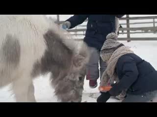Leominster, UK: Pony YHA