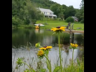 Bristol, VT: View from the pond
