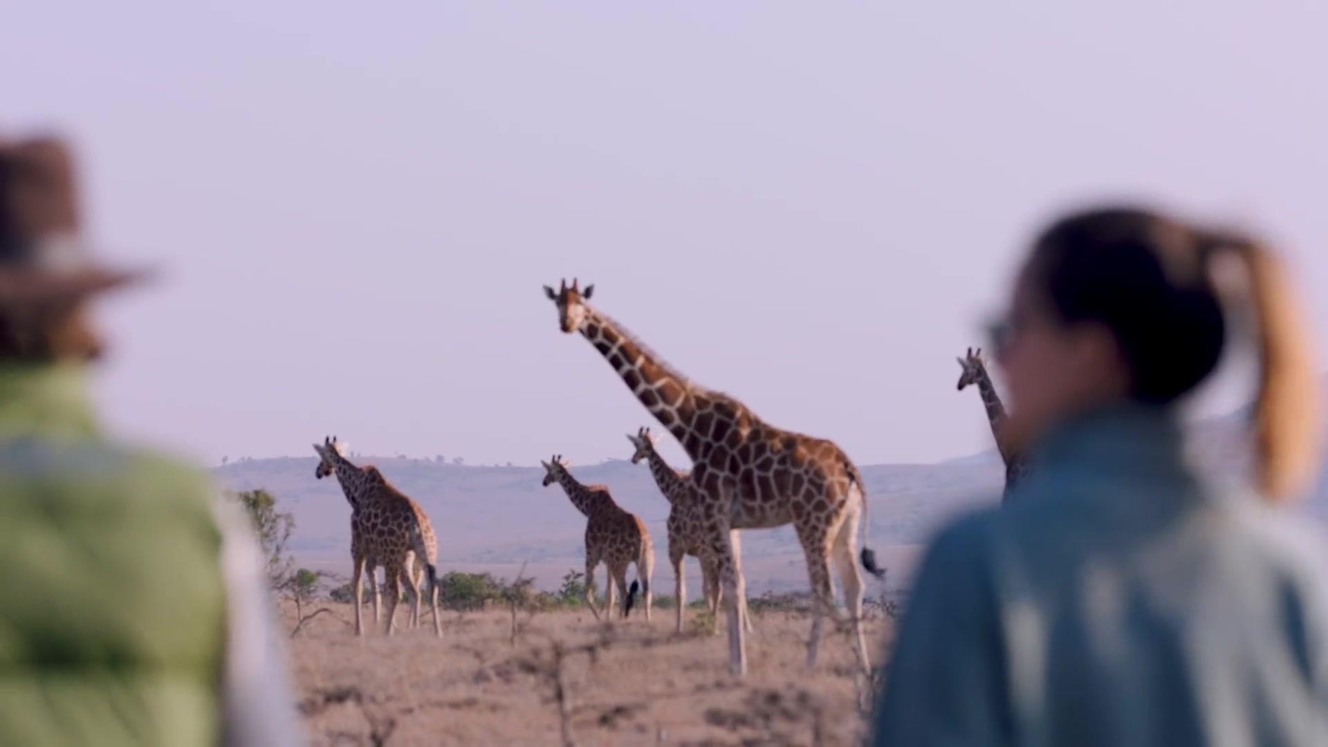 Kenya 2018 best of kenya tourism tripadvisor gumiabroncs Images