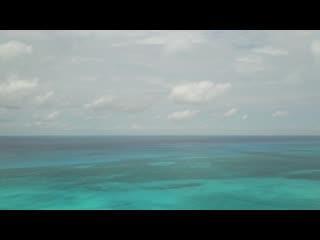 Swim with dolphins at WildQuest in Bimini