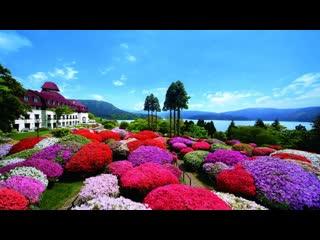 小田急山酒店照片