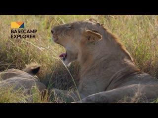 Safari Adventures in Mara Naboisho