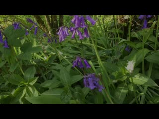 Looe Valley Bluebell Walk from Polraen Country House