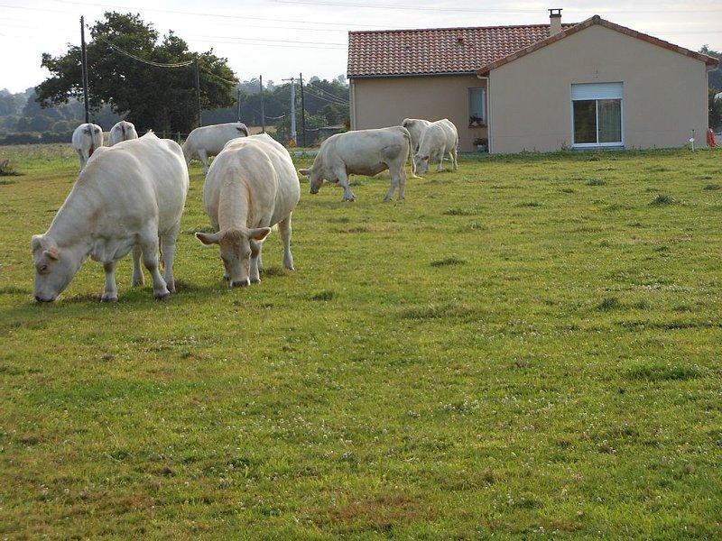 CHAMBRE D'HÔTES A LA CAMPAGNE PROCHE CHEMILLE-EN-ANJOU, holiday rental in Saint-Aubin-de-Luigne