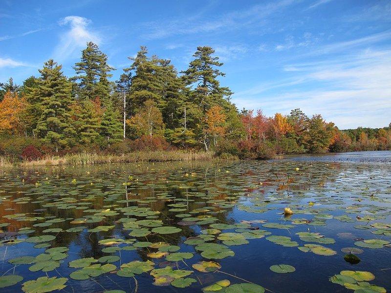 Autumn on Great Pond