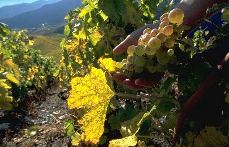 Pays de vignes et de vins, le Valais saura vous séduire