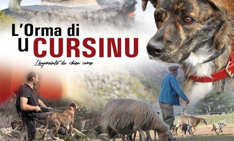 pastoralisme et chiens corses