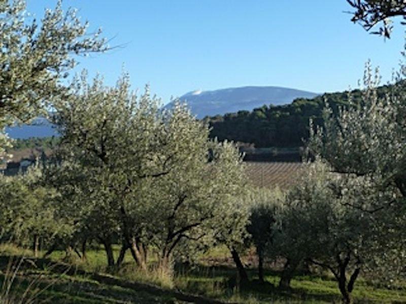 Sur le chemin de 'Merveil', Le Mont Ventoux et les oliviers