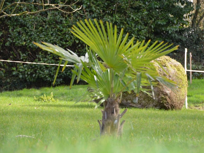 new site for this palm tree in a very nice fresh lawn