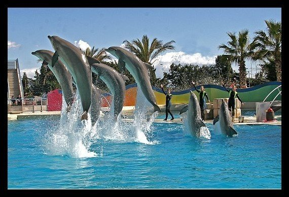 Aquatic Ballet in Marineland