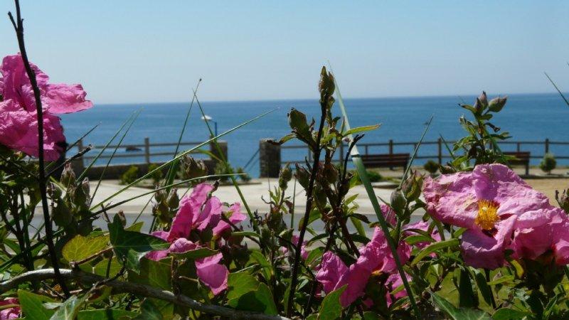 FACE A LA MER ET PLAGE  LOCATION 4 **** AVEC  JARDIN PRIVATIF POUR 4 PERSONNES, holiday rental in Clohars-Carnoet