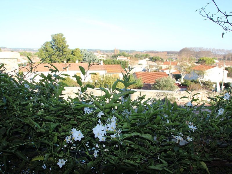 Private Courtyard and Pool, close to Carcassonne and Mediterranean Beaches, holiday rental in Ouveillan