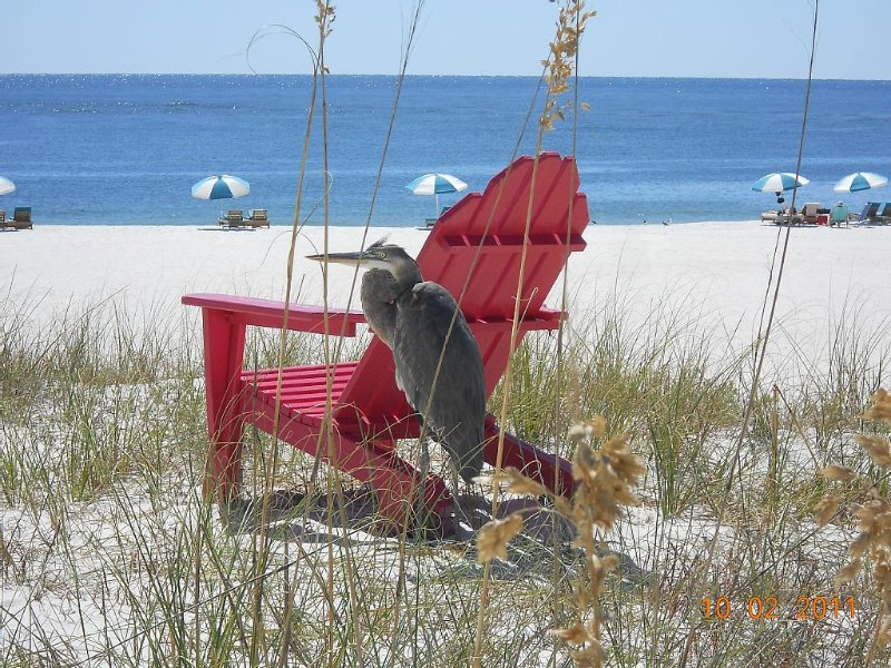 Very Rare 2 King Rooms..Best View in Orange Beach..Perdido Pass and Gulf Front, vacation rental in Orange Beach