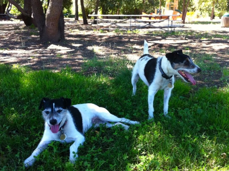 Bring your dogs and take them for a play in Jacob Meily park across the street
