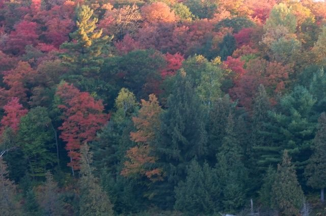 The drive to the lake is filled with stunning colour in the Fall.