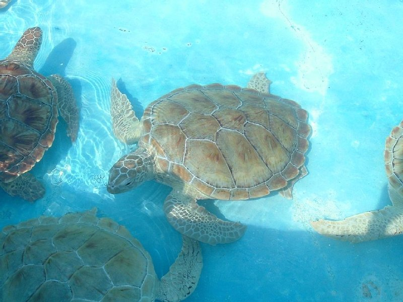 Turtles at nearby Turtle Farm