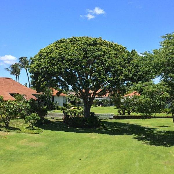 Kiahuna Plantation, Stunning View, Near Beach; Newly Renovated;  Free Pool, Gym, casa vacanza a Koloa