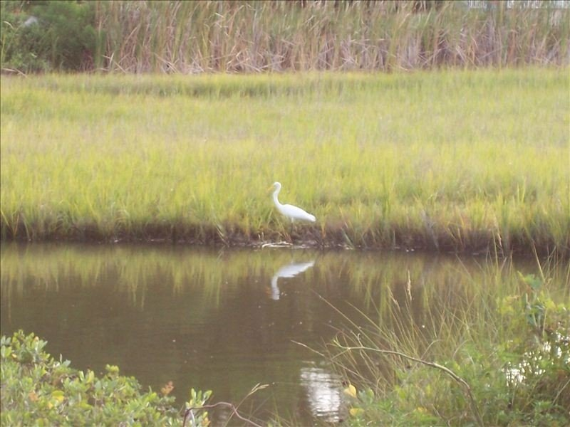 This is a photo of the marsh view. Lot of birds here each day. Morning timeframe