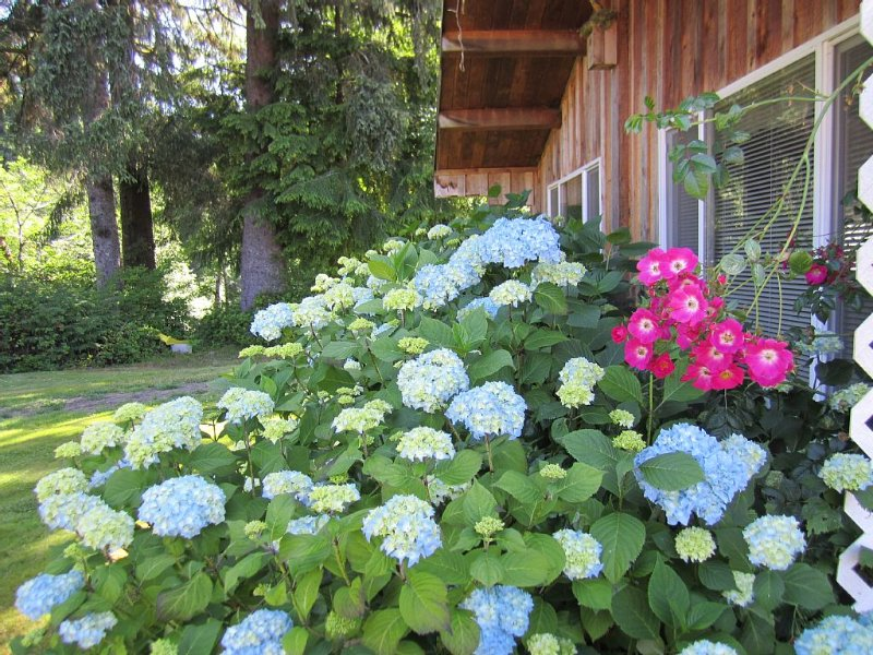 Great All Cedar Cabin On The Sol Duc River - Close to the Park's Favorite Places, alquiler vacacional en Beaver