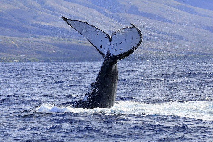 Whale watching (photo by owner!)