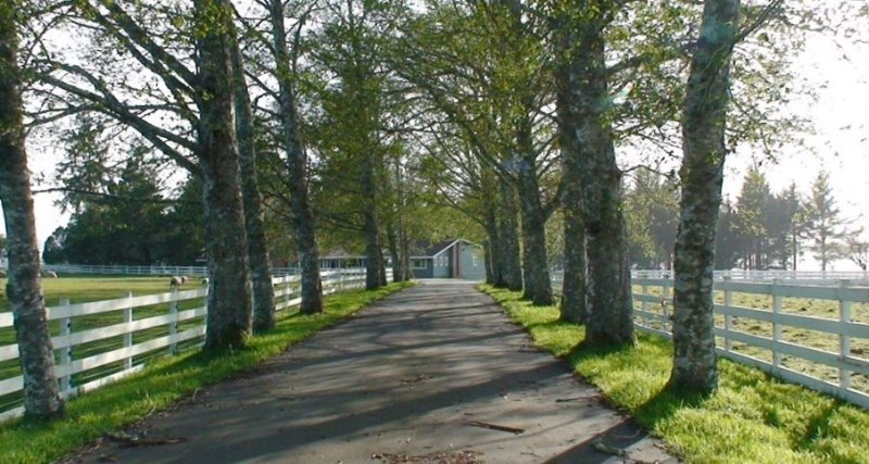 Tree-lined driveway to your lakeside retreat