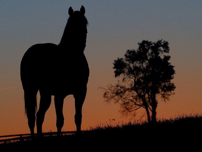 Bourbon County Horse Farm