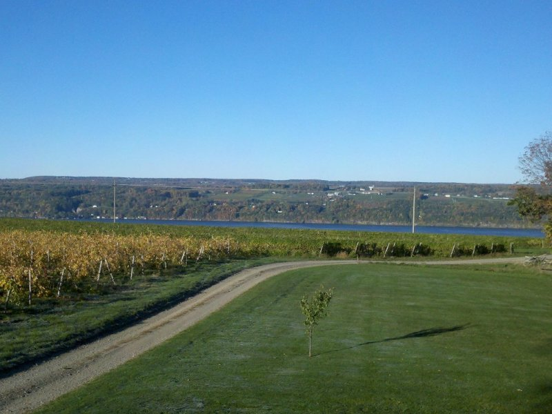 Fall in Hector! View from upstairs master bedroom.