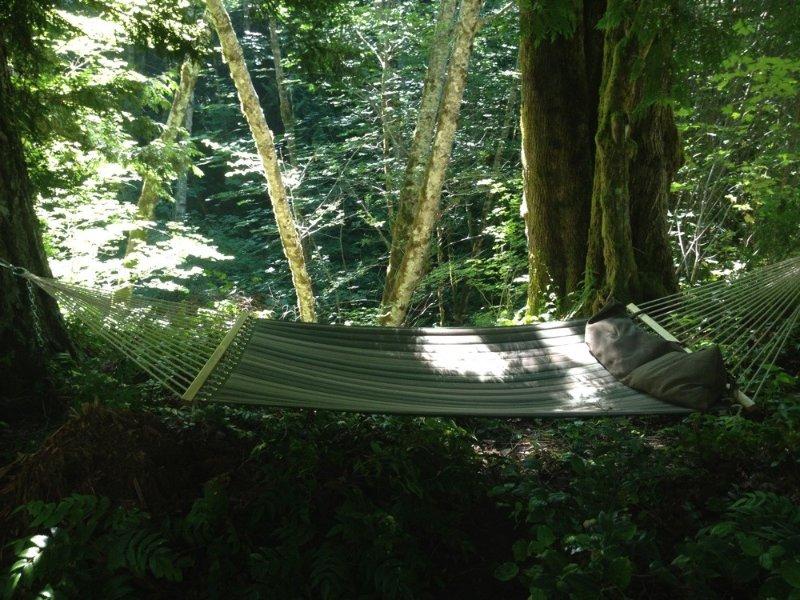 Hammock on the ravine above the creek