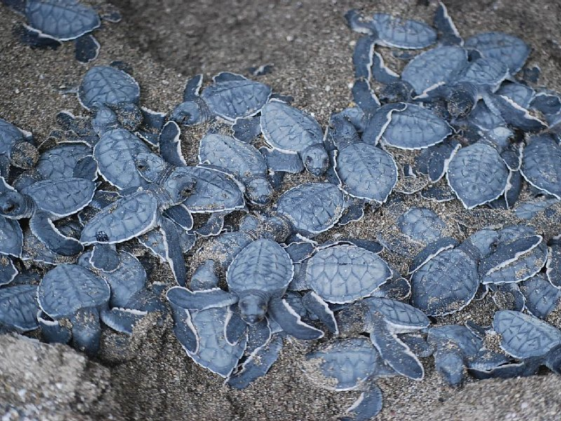 If the turtles are hatching, you can help release them into the ocean!