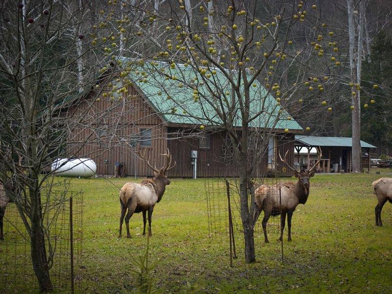 Rustic Getaway In The Heart Of The Pennsylvania Elk Range, location de vacances à Penfield