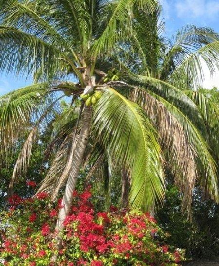 Enjoy Florida sunshine and lush landscaping