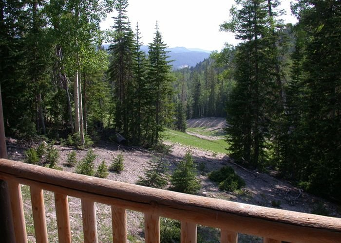 Summertime view off back deck