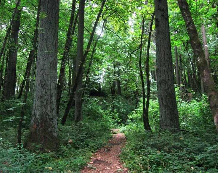 Hendricks Park Trails next door
