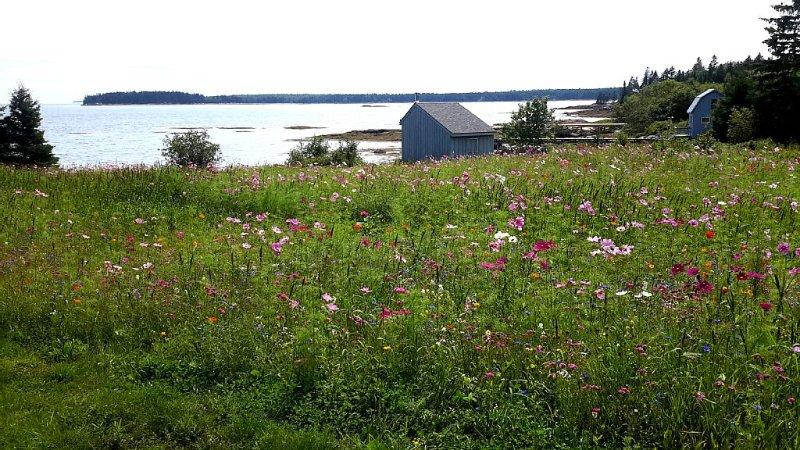 Enjoy the wildflower garden by the sea...