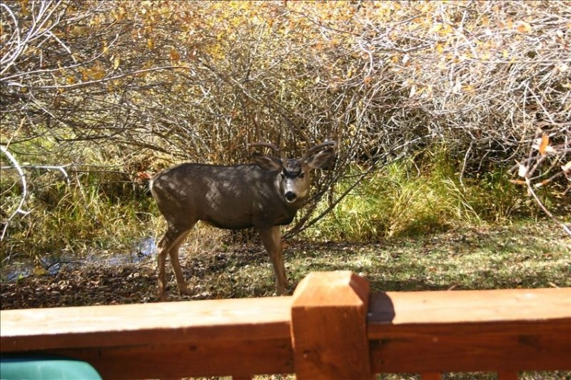 A deer off West Deck.  It is very common to have deer on the property!