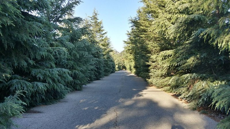 Driveway to our home!