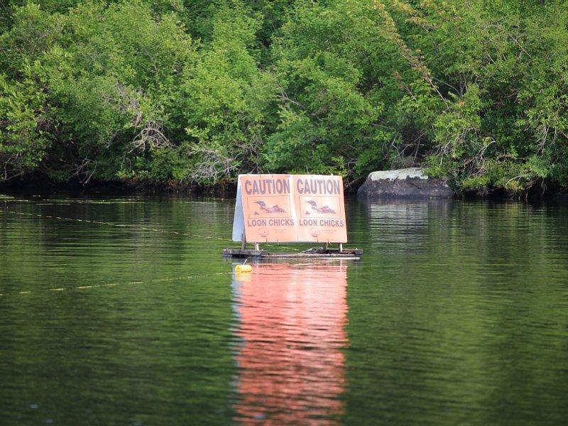 """Loon Heiligtum ist etwa 1 m vom Wasser entfernt. Die Zeichen sagen """"Vorsicht Loon Chicks."""""""