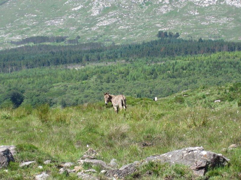 Parc national du Connemara et Diamond Mountain - 10 minutes en voiture