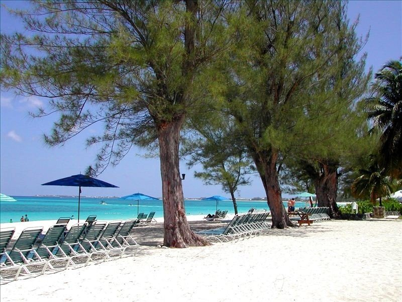 Our beach with Australian Pines for shade