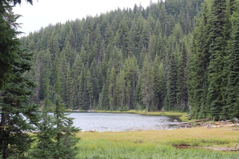 Todd Lake is one of many beautiful lakes along the Mt Bachelor Scenic Highway.